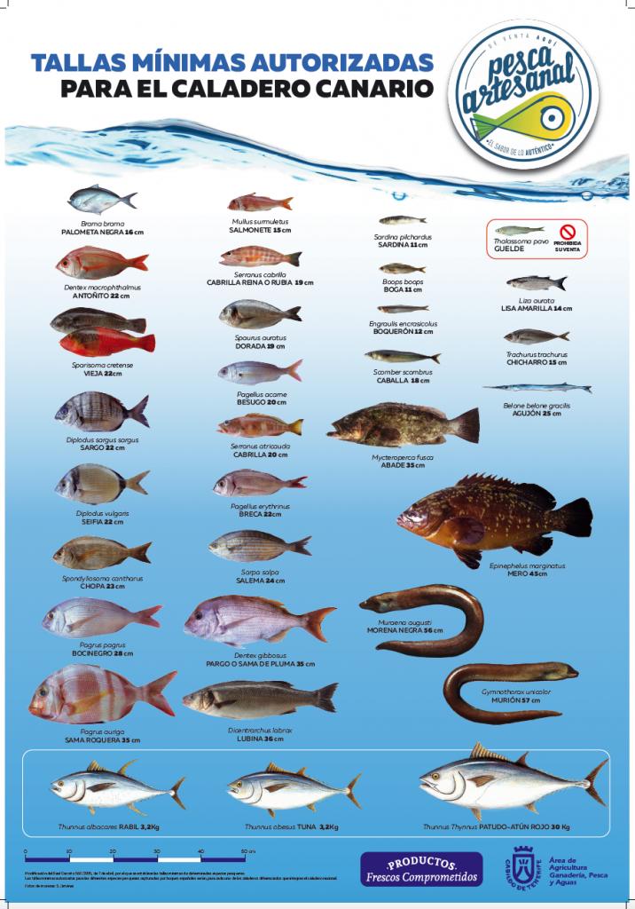 Las capturas pesqueras deben ceñirse a unas tallas mínimas revisadas por el Ministerio de Agricultura, Alimentación y Medio Ambiente.