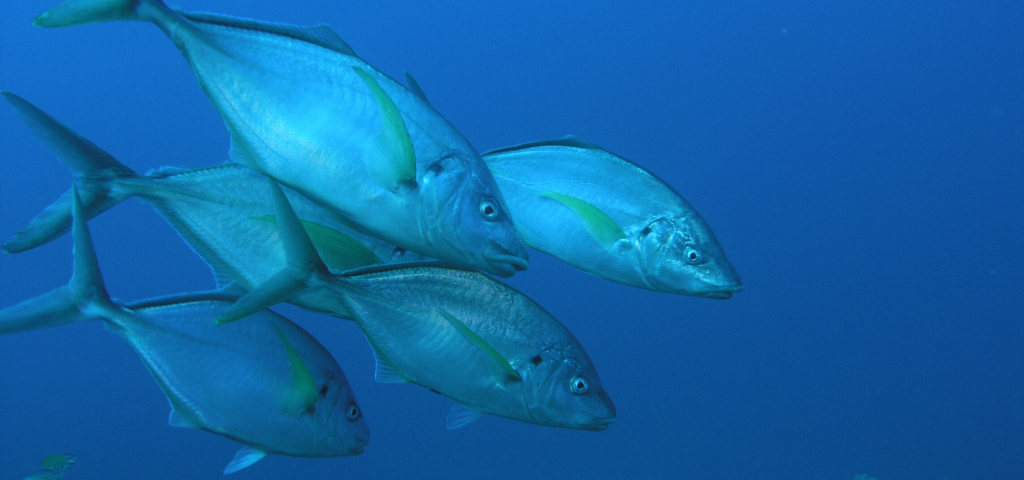 El pleno del Cabildo de Tenerife, aprobó en marzo de 2020, impulsar la declaración de las Reservas Marinas de Interés Pesquero para Anaga y Teno
