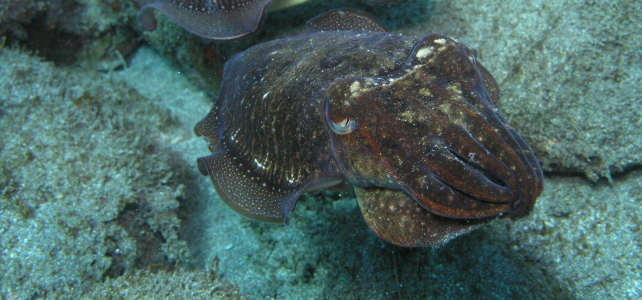 reservas marinas de interés pesquera