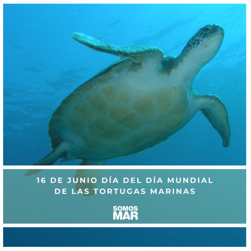 16 de junio, Día Mundial de las Tortugas Marinas. Pesca Tenerife