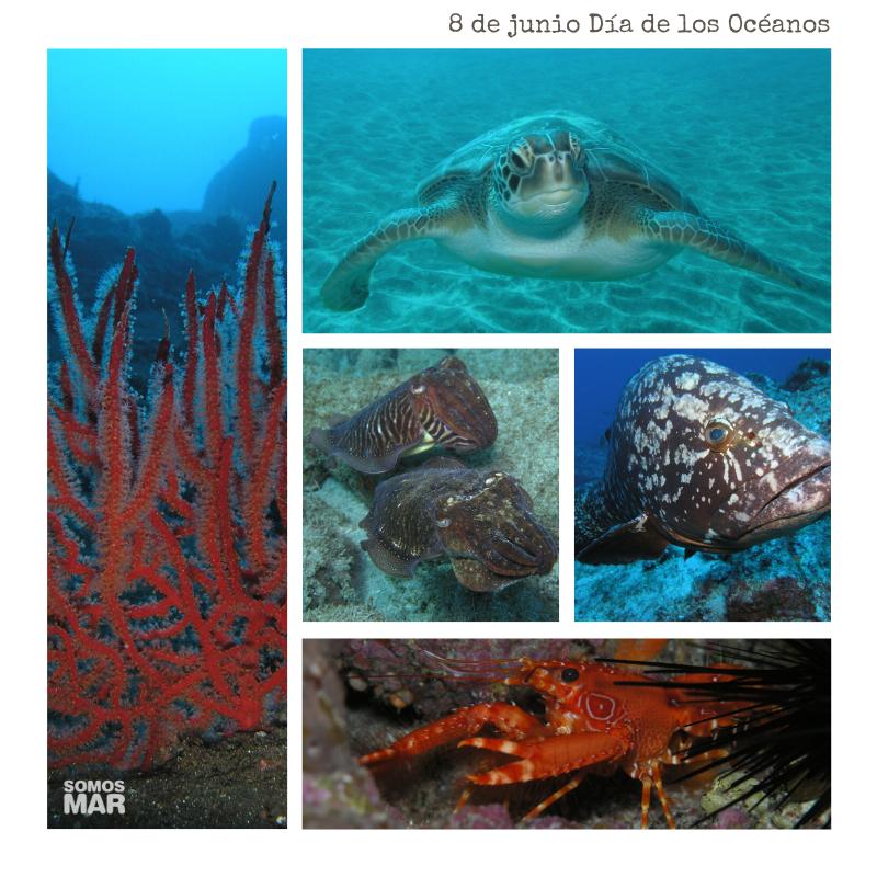 8 de junio Día de los Océanos