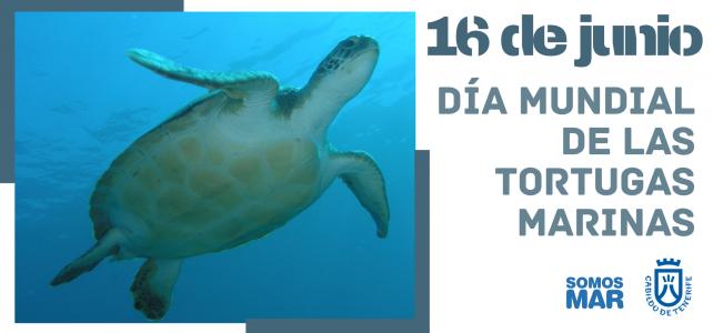 16 de junio, Día Mundial de las Tortugas Marinas