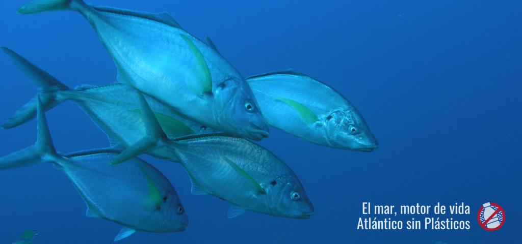 Atlántico sin plásticos. Cabildo Insular de Tenerife, área de Agricultura, Ganadería y Pesca