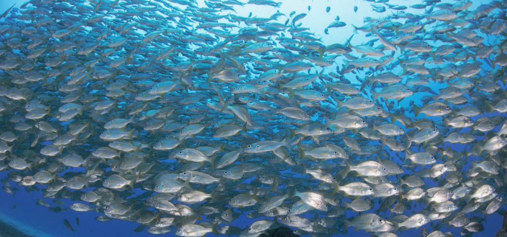 El Cabildo abre la convocatoria de ayudas para las cofradías de pescadores a través del área de Agricultura Ganadería y Pesca.
